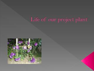 L ife  of our project plant