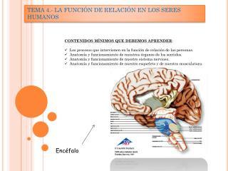 TEMA 4.- LA FUNCIÓN DE RELACIÓN EN LOS SERES HUMANOS