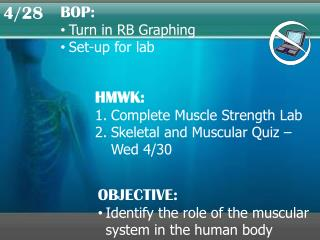HMWK: Complete Muscle Strength Lab Skeletal and Muscular Quiz – Wed 4/30