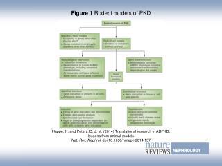 Figure 1  Rodent models of PKD