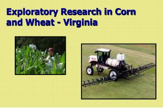 Exploratory Research in Corn  and Wheat - Virginia