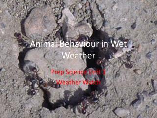 Animal  Behaviour  in Wet Weather