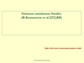Solanum ramulosum Sendtn.  (R.Kummorow et al.2272,RB)