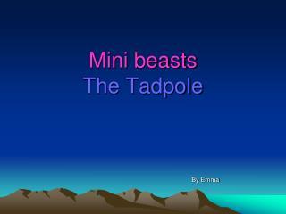 Mini beasts The Tadpole
