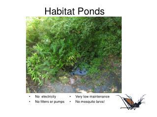 Habitat Ponds