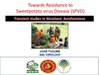 Towards Resistance to  Sweetpotato virus Disease (SPVD)