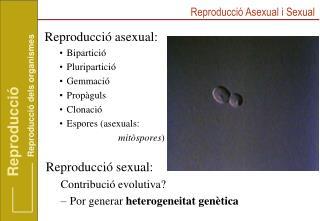 Reproducció asexual: Bipartició Pluripartició Gemmació Propàguls Clonació Espores (asexuals: