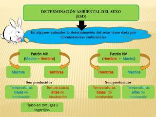 DETERMINACIÓN AMBIENTAL DEL SEXO (ESD)