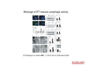 O Pampliega et al. Nature  000 , 1-7 (2013)  doi:10.1038/nature12639
