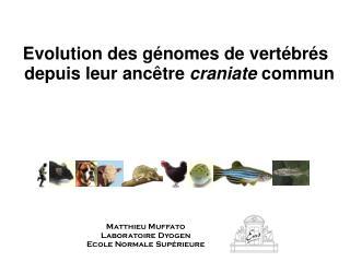 Evolution des  génomes  de vertébrés depuis leur ancêtre  craniate  commun