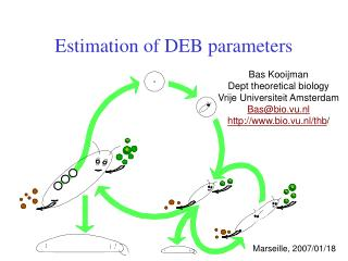 Estimation of DEB parameters