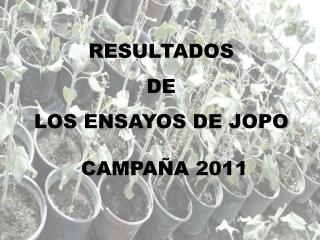 RESULTADOS  DE  LOS ENSAYOS DE JOPO   CAMPAÑA 2011