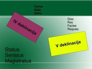 IV deklinacija