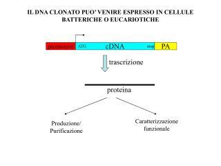 IL DNA CLONATO PUO' VENIRE ESPRESSO IN CELLULE BATTERICHE O EUCARIOTICHE