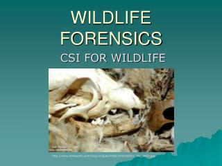 WILDLIFE FORENSICS