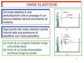 Ogni punto del corpo elastico oscilla intorno alla sua posizione di equilibrio con moto periodico.