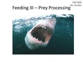 Feeding III – Prey Processing