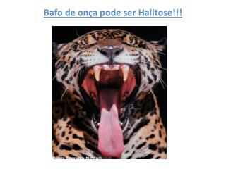 Bafo de onça pode ser Halitose!!!