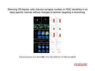D Kerschensteiner  et al. Nature 460 ,  1016 - 1020  (2009) doi:10.1038/nature08 236