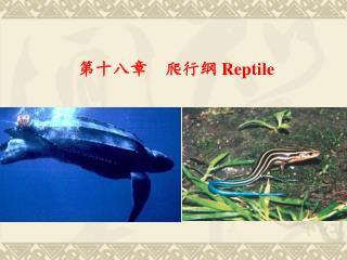 第十八章    爬行纲  Reptile
