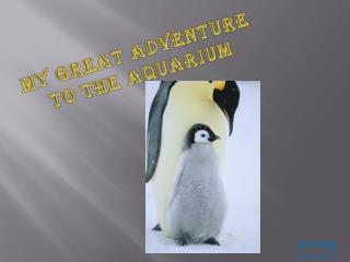 My Great Adventure to the Aquarium