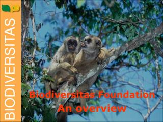 Biodiversitas Foundation An overview
