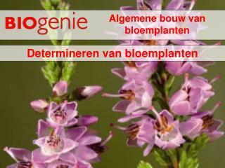 Algemene bouw van bloemplanten
