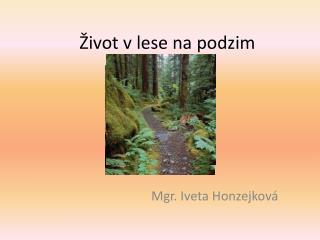 Život v lese na podzim