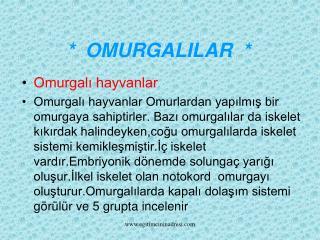 *  OMURGALILAR  *