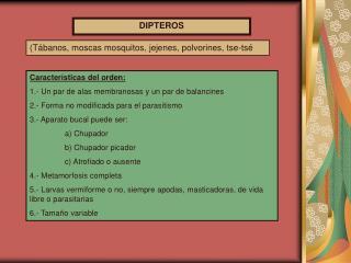 DIPTEROS
