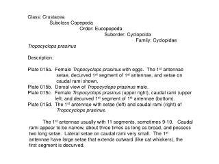 Class: Crustacea                 Subclass Copepoda