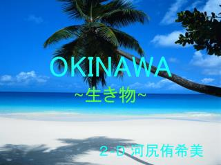 OKINAWA ~ 生き物 ~