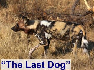 """""""The Last Dog"""""""