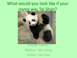 What would you look like if your name was Tai Shan?
