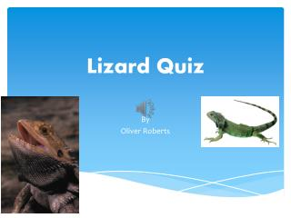 Lizard Quiz