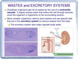 WASTES and EXCRETORY SYSTEMS