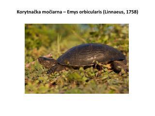Korytnačka močiarna – Emys orbicularis (Linnaeus, 1758)