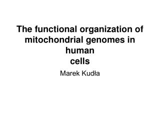 The functional organization of mitochondrial genomes in human cells