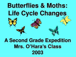 Butterflies & Moths: Life Cycle Changes