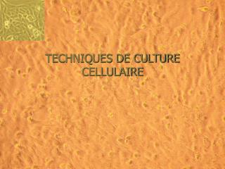 TECHNIQUES DE CULTURE CELLULAIRE