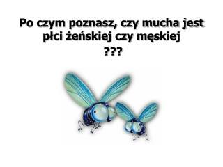 Po czym poznasz, czy mucha jest  p ł ci  ż e ń skiej czy m ę skiej  ???