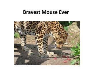 Bravest Mouse Ever