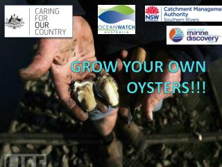 GROW YOUR OWN OYSTERS!!!