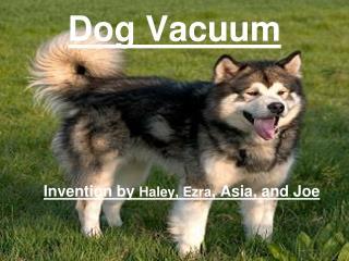 Dog Vacuum