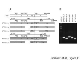 Jiménez  et al ., Figure 2