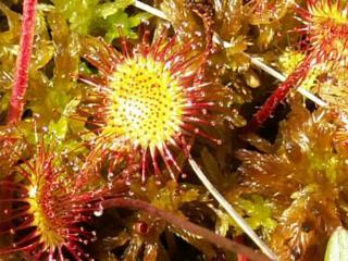 Предмет «Науки о биологическом многообразии»  Раздел «Систематика высших растений»