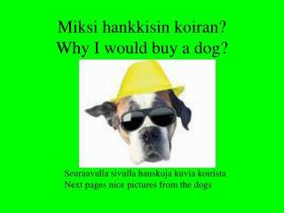 Miksi hankkisin koiran? Why I would buy a dog?