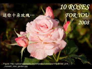10 ROSES FOR YOU 2008