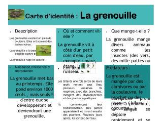 Carte d'identité: La grenouille