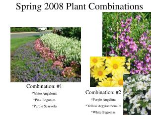 Spring 2008 Plant Combinations